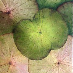 lotusbladeren op hout en acrylverf 40x40 cm
